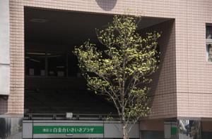 K_5_0680